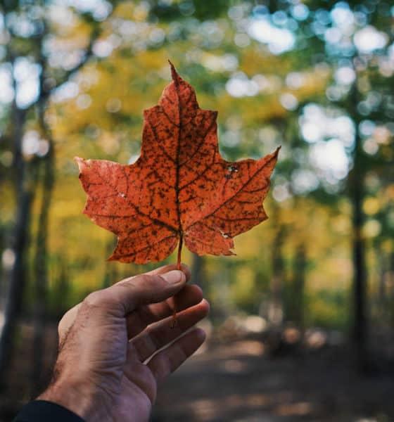 Observación en fauna Columbia Británica Canadá. Foto: Guillaume Jaillet