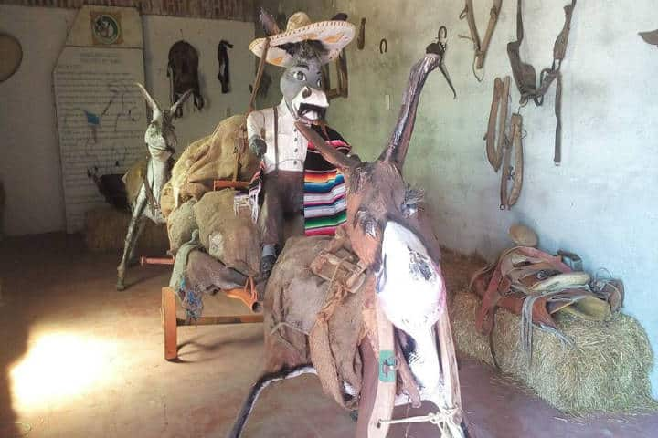 Burrolandía ¡como lo lees! el único santuario para burros en Latinoamérica se encuentra en el Estado de México