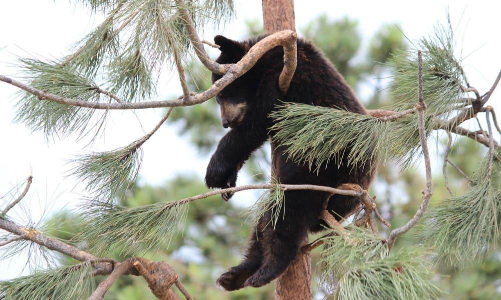 Columbia Británica, los mejores avistamientos de vida salvaje Foto. Pixabay