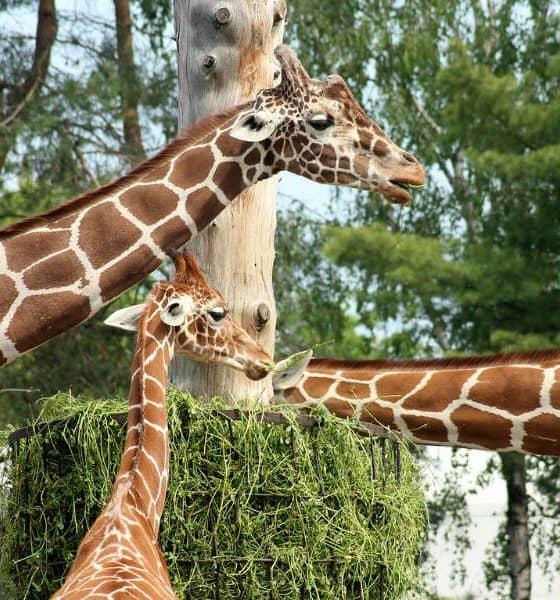 Parque Ecológico de Zacango Foto. Pixabay