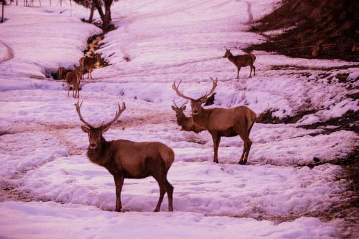 Renos en Churchill Canadá: Maxim Izbash