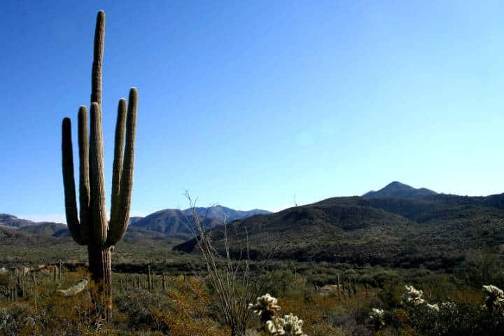 Santuario de Cactus Foto Alan Levine
