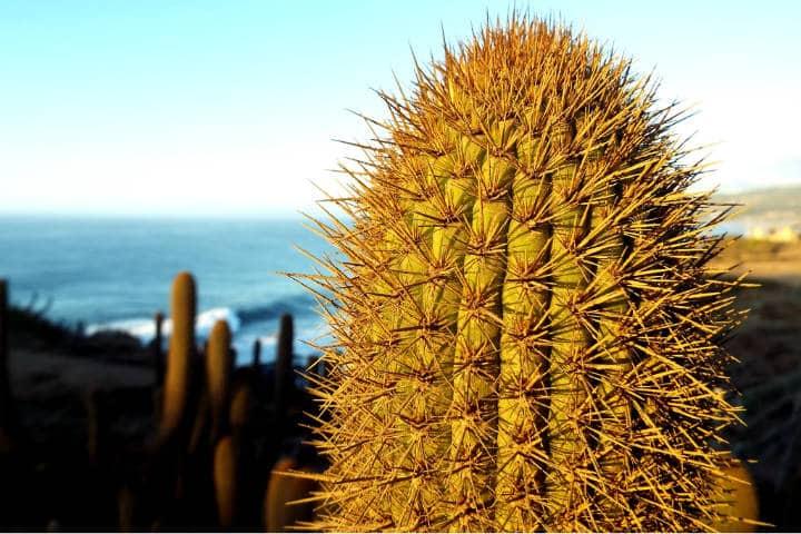 Santuario de Cactus Foto Carlos González