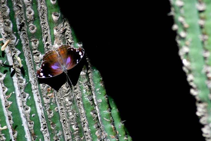 Santuario de Cactus Foto Mark Notari