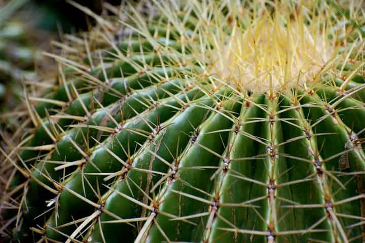 Santuario de Cactus Foto Tom Gill