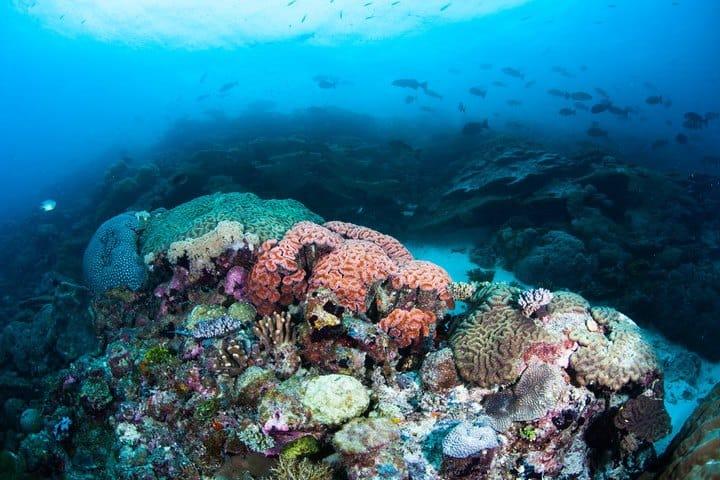 Snorkel en Isla Utila Foto Shaun Doyle