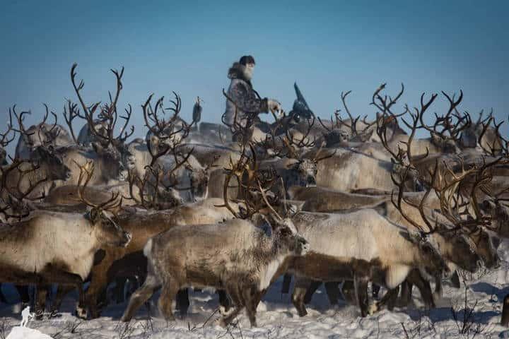 Tundra North