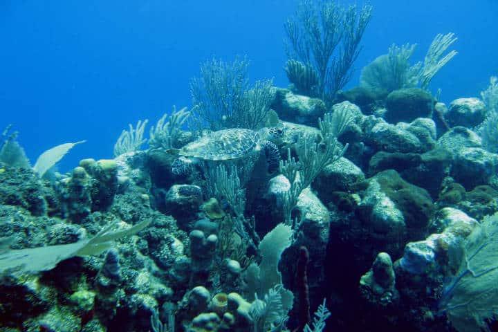Islas de la Bahía en Honduras