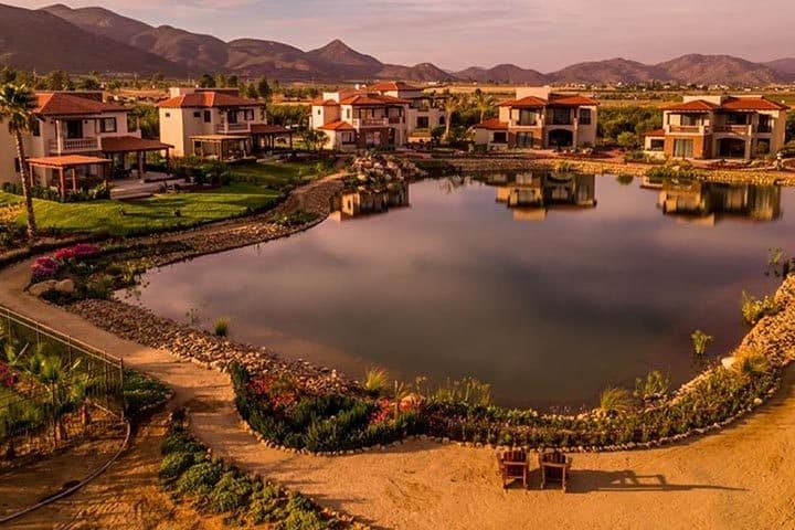 Viñedo El Cielo, Baja California. Foto Ensenada