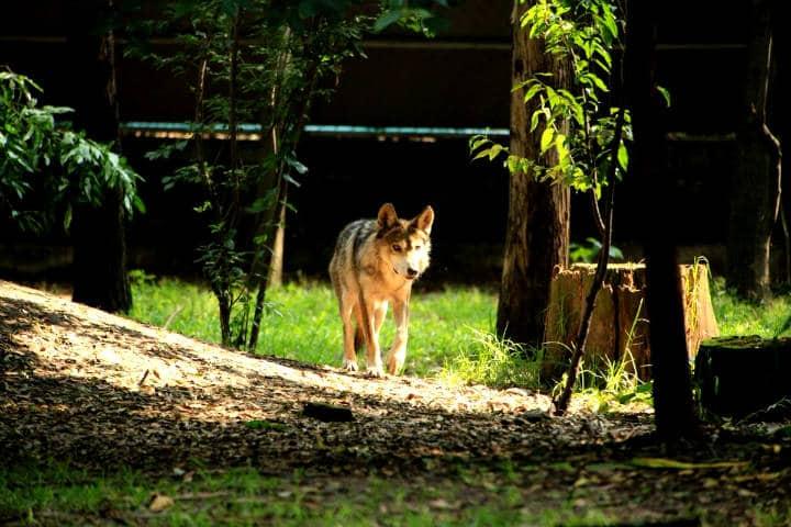 Zoológico Los Coyotes Foto Medio Ambiente México