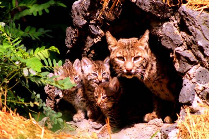 Zoológico Los Coyotes Foto Plano Informativo