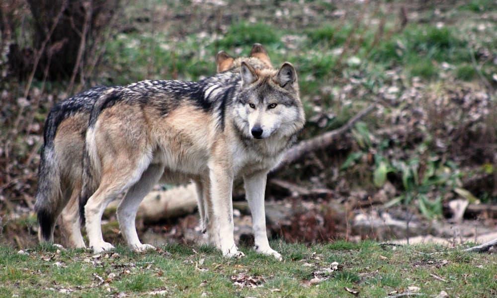 Zoológico Los Coyotes, cómo admirar y conservar las especies endémicas Foto. Pixabay