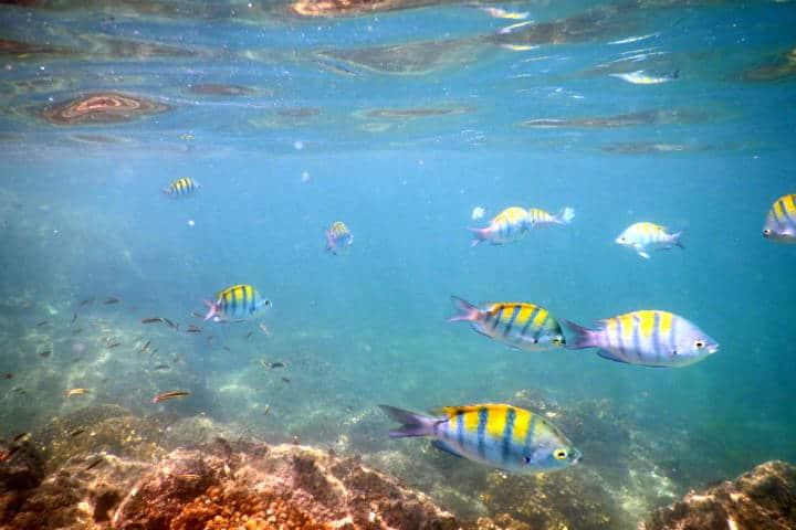 5 Razones para visitar Cabo Pulmo
