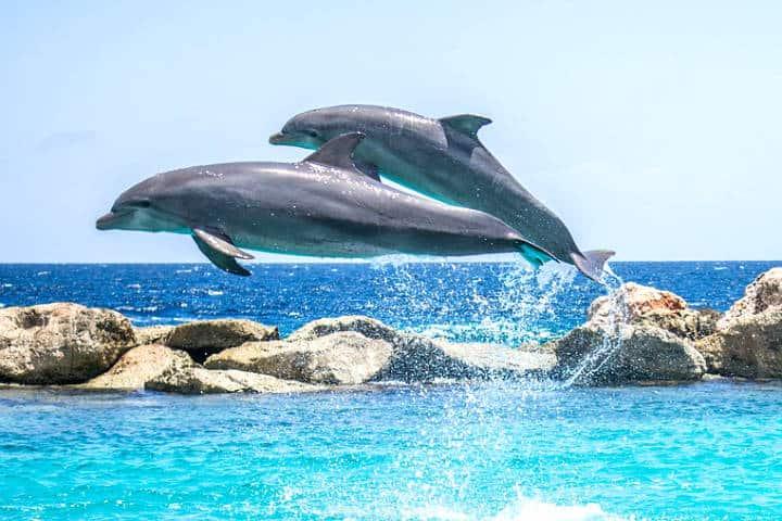 5 sitios para visitar en Bocas del Toro, uno de los archipiélagos más biodiversos del mundo. Foto de Panama Dolphin