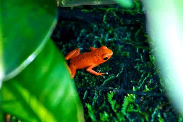 5 sitios para visitar en Bocas del Toro, uno de los archipiélagos más biodiversos del mundo. Foto de Pinky Red