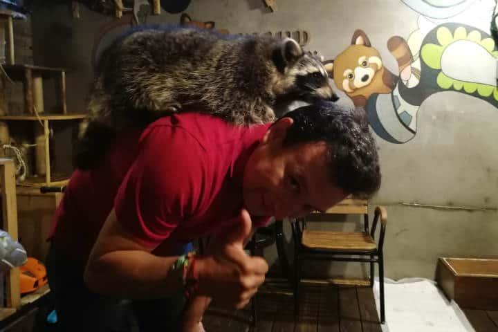 Cafeterías para acariciar mascotas en Seúl 10