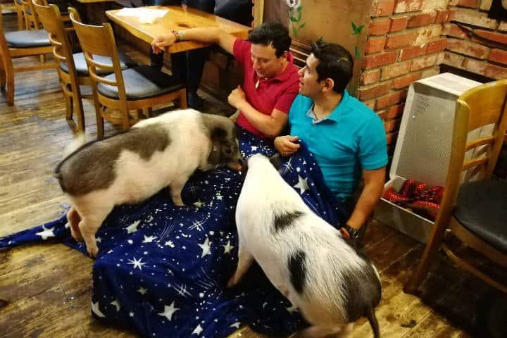 Cafeterías para acariciar mascotas en Seúl 4