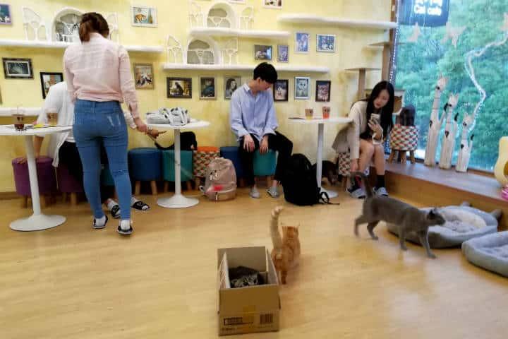 Cafeterías para acariciar mascotas en Seúl 57