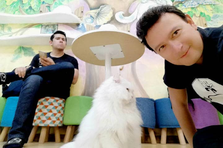 Cafeterías para acariciar mascotas en Seúl 62