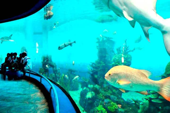 La vida marina de México Foto Noticias de la Industria turistica