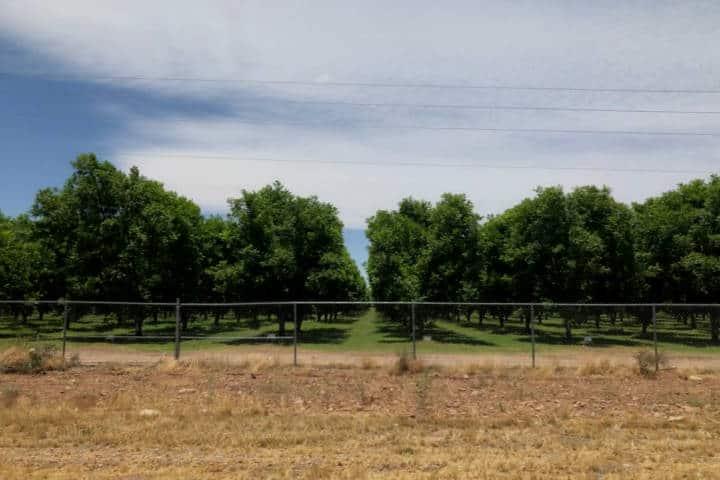 Las-más-verdes-de-la-región-Sitios-imperdibles-de-Valle-de-Allende.-Foto-La-Opción-de-Chihuahua-5