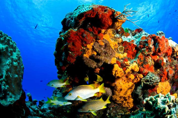 La vida marina de México Foto Gobierno de México