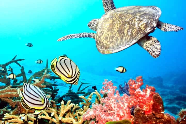 La vida marina de México Foto Yucatán a la Mano