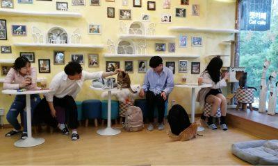 PORTADA Cafeterías para acariciar mascotas en Seúl 55