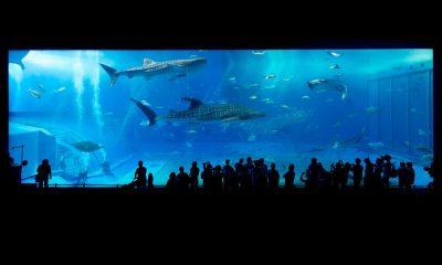 Destinos de México para admirar la vida marina Foto. Pixabay