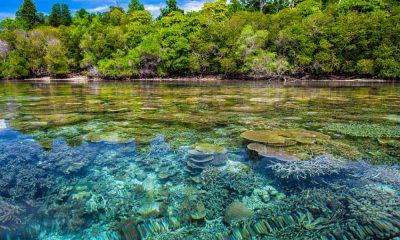 Sitios para visitar en Bocas del Toro Foto. Pixabay