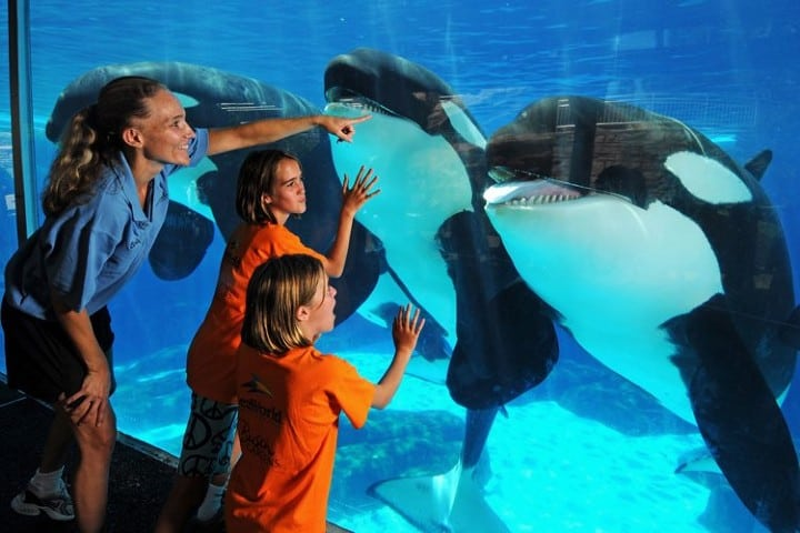 """Seaworld-es-uno-de-los-destinos.-""""October-Kids-Free"""".-Foto:-Az-Big-Media-3"""