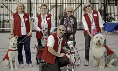 Cachorros en el aeropuerto Foto. Cortesía