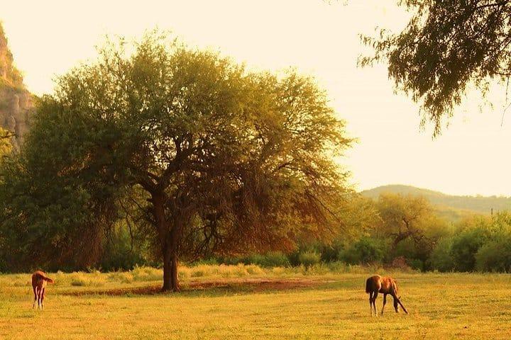 El Gavilán Rio Sonora. Foto Roberto Obregón.