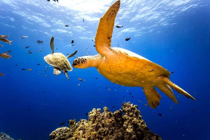Islas Gili Foto Oceands5Dive