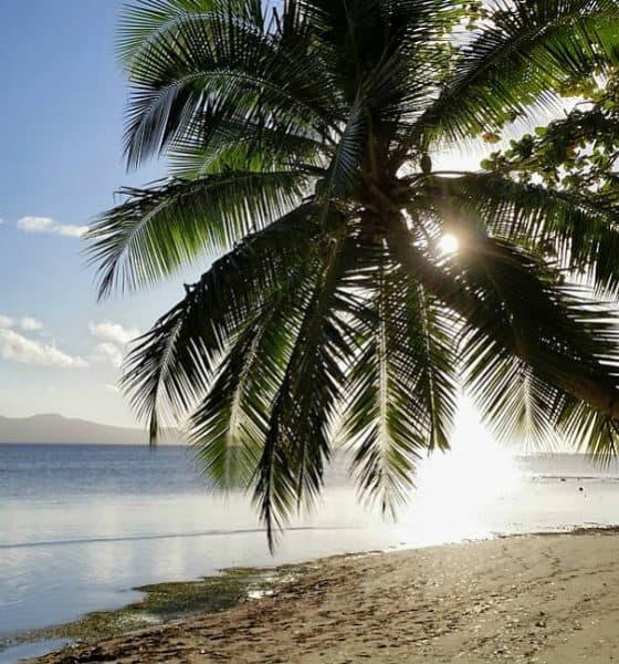 Estrafalaria Fiyi Foto. Pixabay
