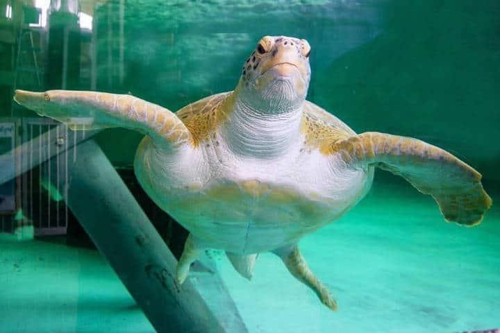 Sea Turtle Inc. Foto South Padre Island