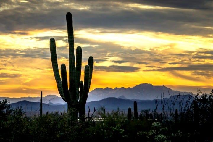 Sonora. Foto J Gempler.