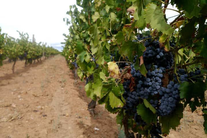 Vino de Sonora Foto El Souvenir 21