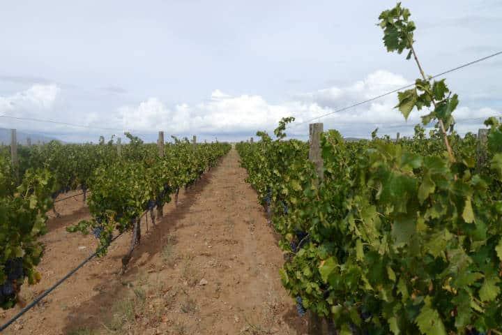 Vino de Sonora Foto El Souvenir 31