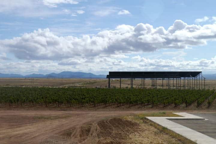 Vino de Sonora Foto El Souvenir 34