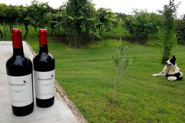 Vino de Sonora Foto El Souvenir 47