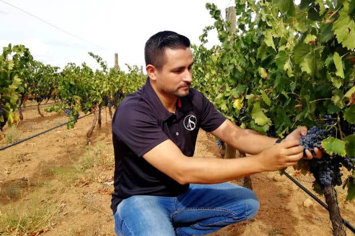 Vino de Sonora Foto El Souvenir 51