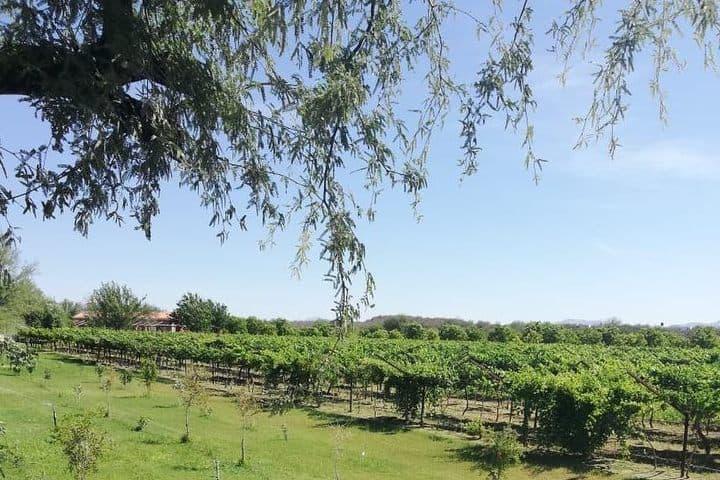 Vino en Sonora. Foto Vinos Giottonini.