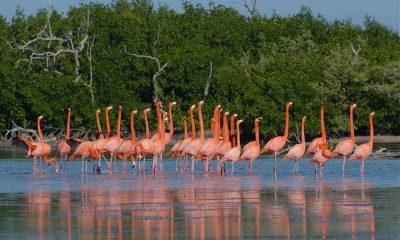 Ría de Lagartos Foto. Wikipedia