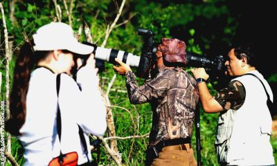 Festival de Aves Yucatán Foto Festival de las Aves