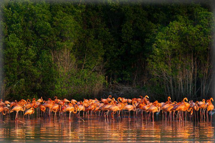 Traveler Foto: Celestún Yucatán