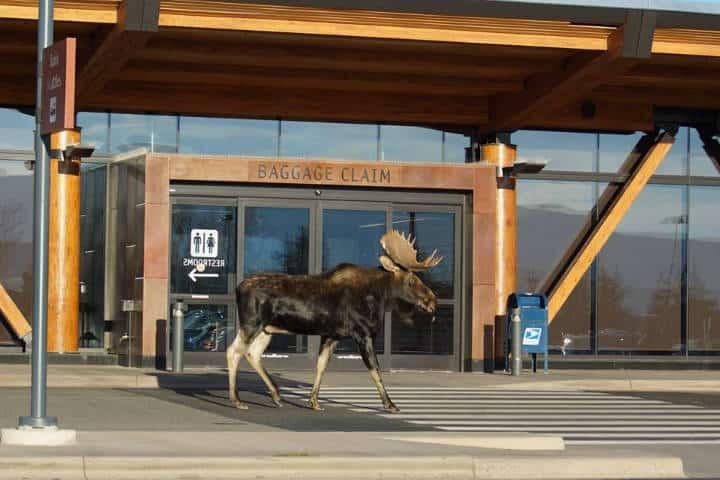 Aeropuerto Jackson Hole Foto JHMR