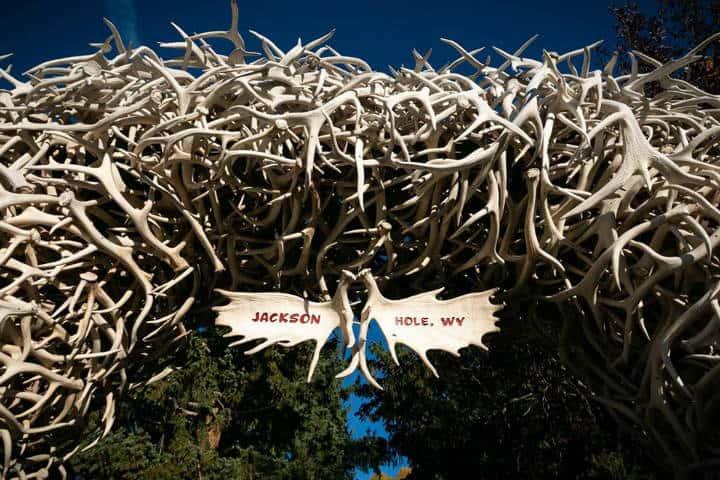 Cuernos de ciervo elk Jackson Hole Foto JHMR