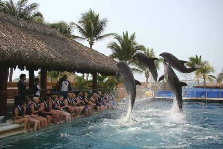 Delfiniti Ixtapa. Foto Delfiniti Ixtapa