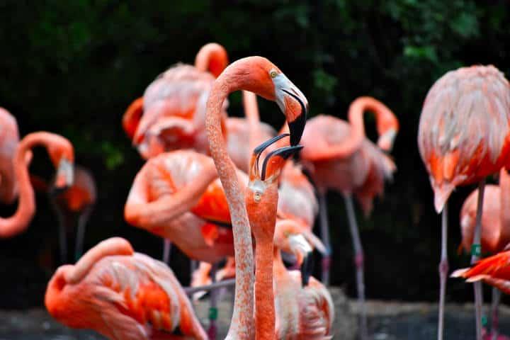 Festival de Aves Yucatán Foto Five Furlongs